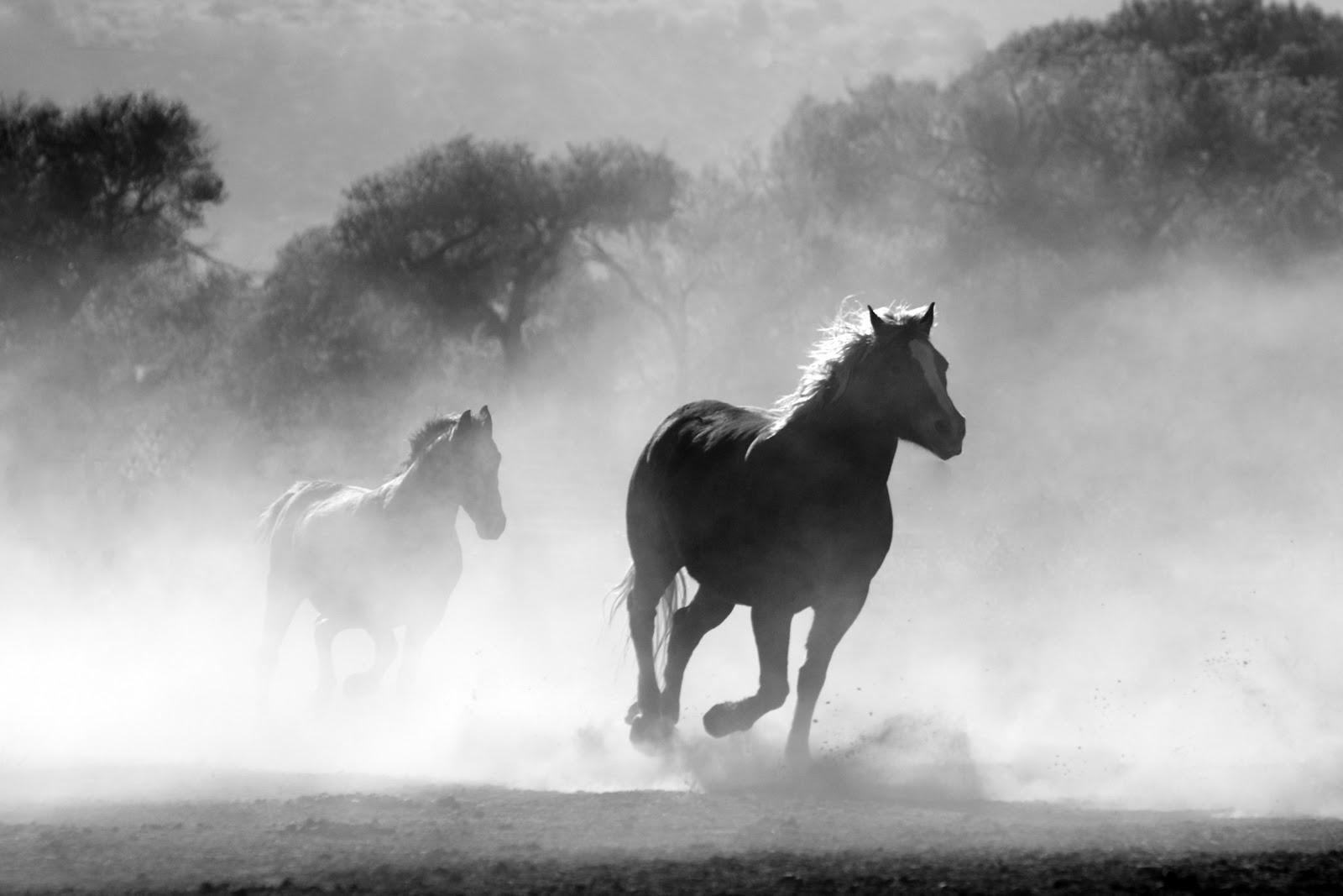 二頭の馬が霧の中を走っている