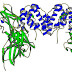 Immunology: MCQ on Cytokines, Interferons & Interleukins
