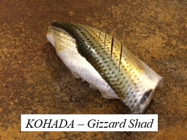 Kohada(Gizzard shad)