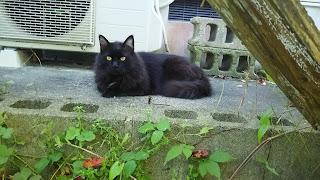 大きな黒い猫が横になっている様子