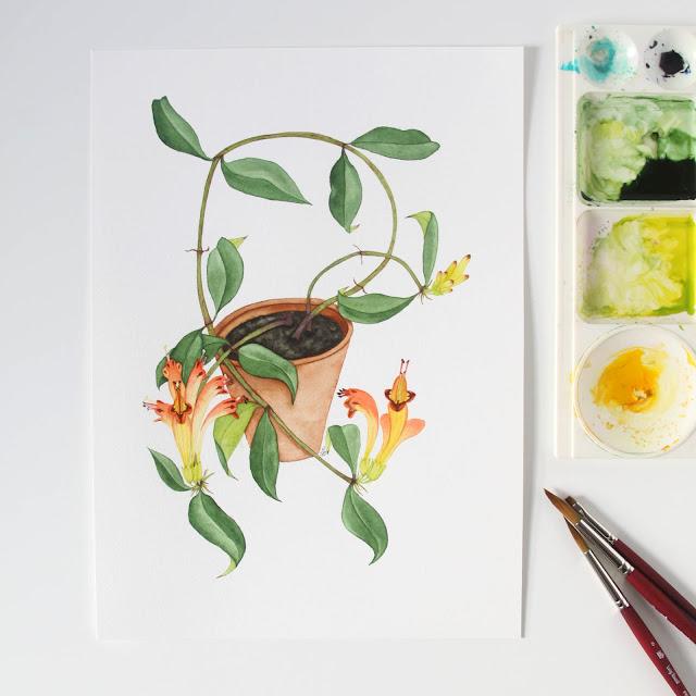 watercolor, botanical watercolors, orange lipstick plant, houseplant, houseplant portrait, flowering houseplant, watercolor houseplant, Anne Butera, My Giant Strawberry