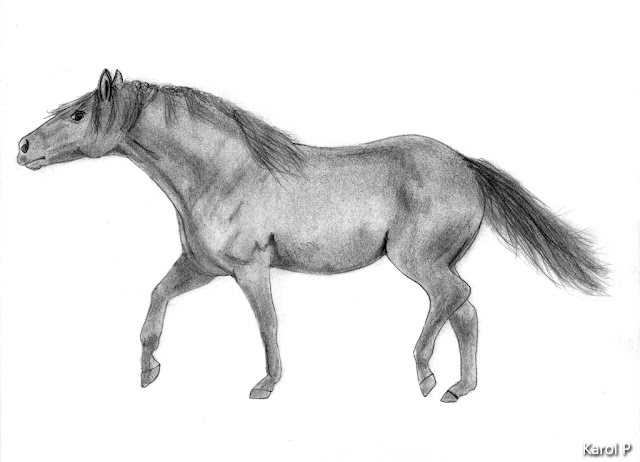 Horse - Graphite Drawing