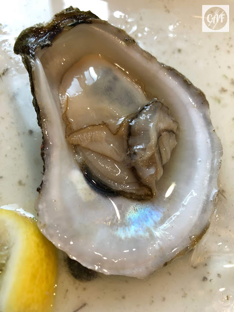 Fresh raw oyster from Cape Cod, Massachusetts