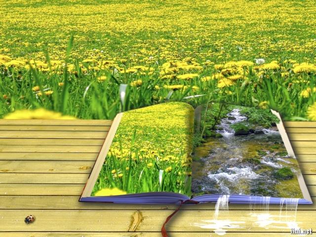 ảnh nghệ thuật sách và vườn hoa vàng rực rỡ