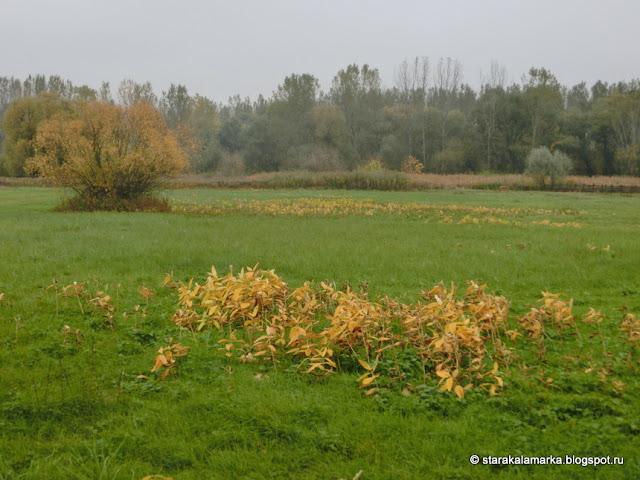 осень в венгрии, климат венгрии, отзывы о будапеште