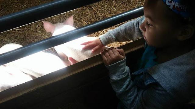 13. Visit a farm
