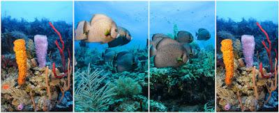 Arrecife de Coral-Belice