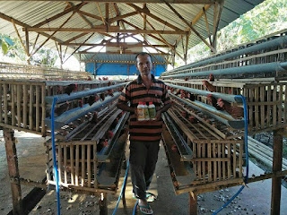 Beternak ayam petelur teknologi nasa