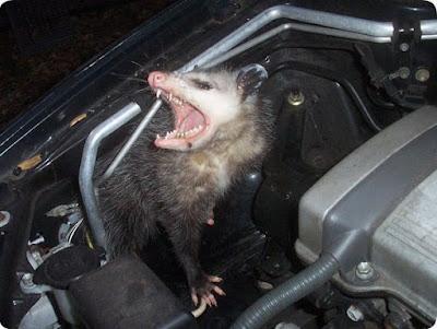 harga cairan anti tikus untuk mengusir tikus