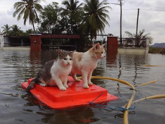 Fenomena Alam : Banjir 2014