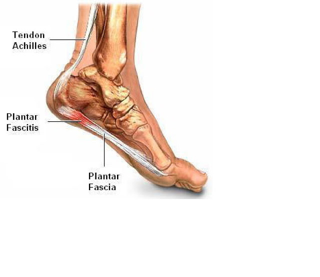 otot kaki manusia