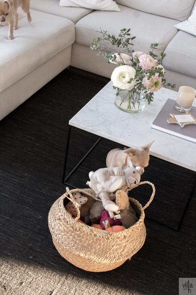chihuahua, olohuone, sisustus, interior