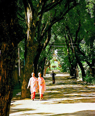 Avenue in Monywa Myanmar