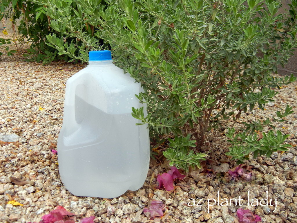 Diy Garden Portable Drip Irrigation With A Recycled Milk