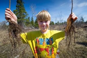 Showcasing the Michigan DNR: Kids, sportsmen help DNR improve Drummond Island grouse habitat