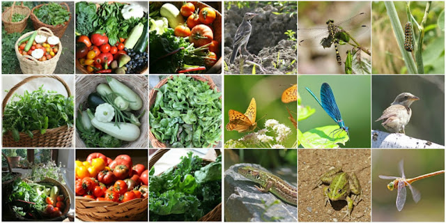 Produce_and%2B_Wildlife_Permaculture_Bal