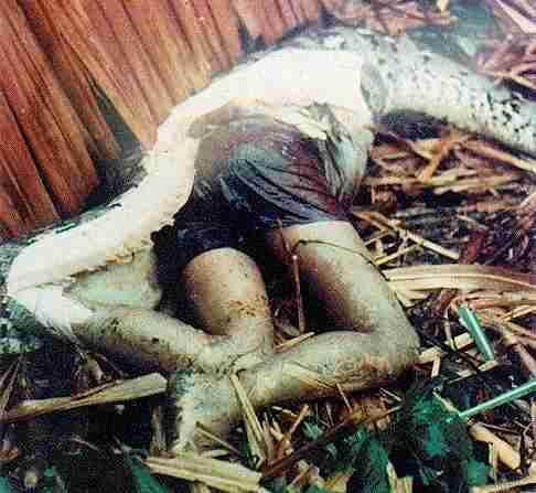 Anaconda Snake Eating Human