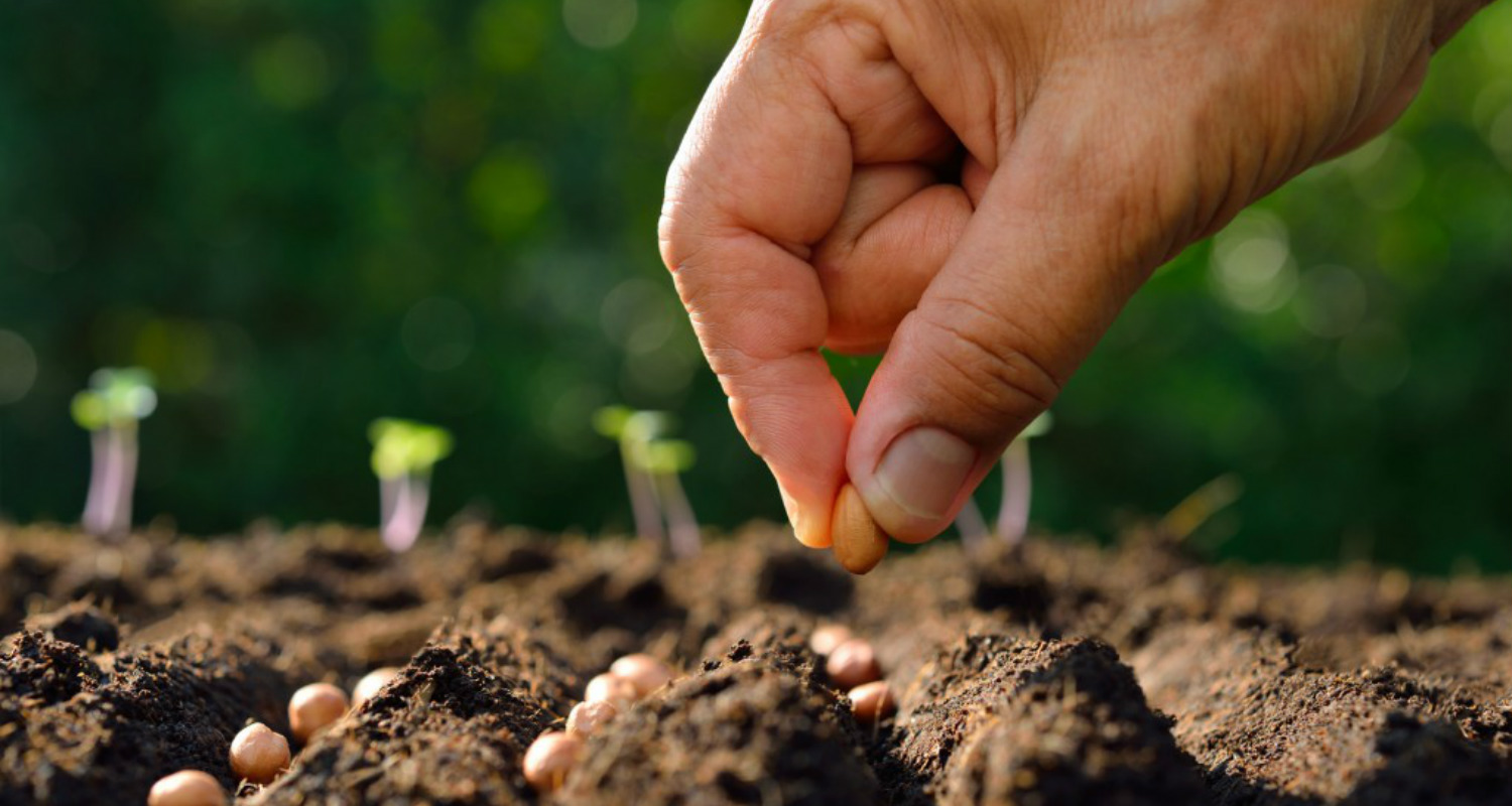 Quotes About Planting Seeds For Life Mesmerizing Quotes