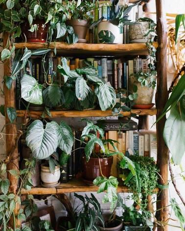 Muchas plantas en maceta en estanteria de bambu