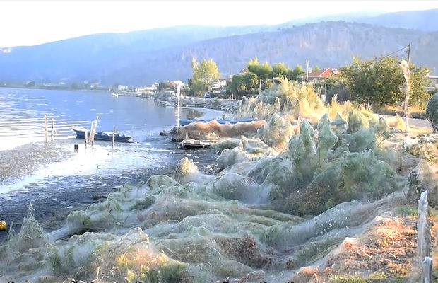 western Greece in the city of Aitolico, Tetragnatha genus spiders