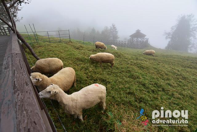 TAIWAN TRAVEL GUIDE 2019 CINGING FARM NANTOU