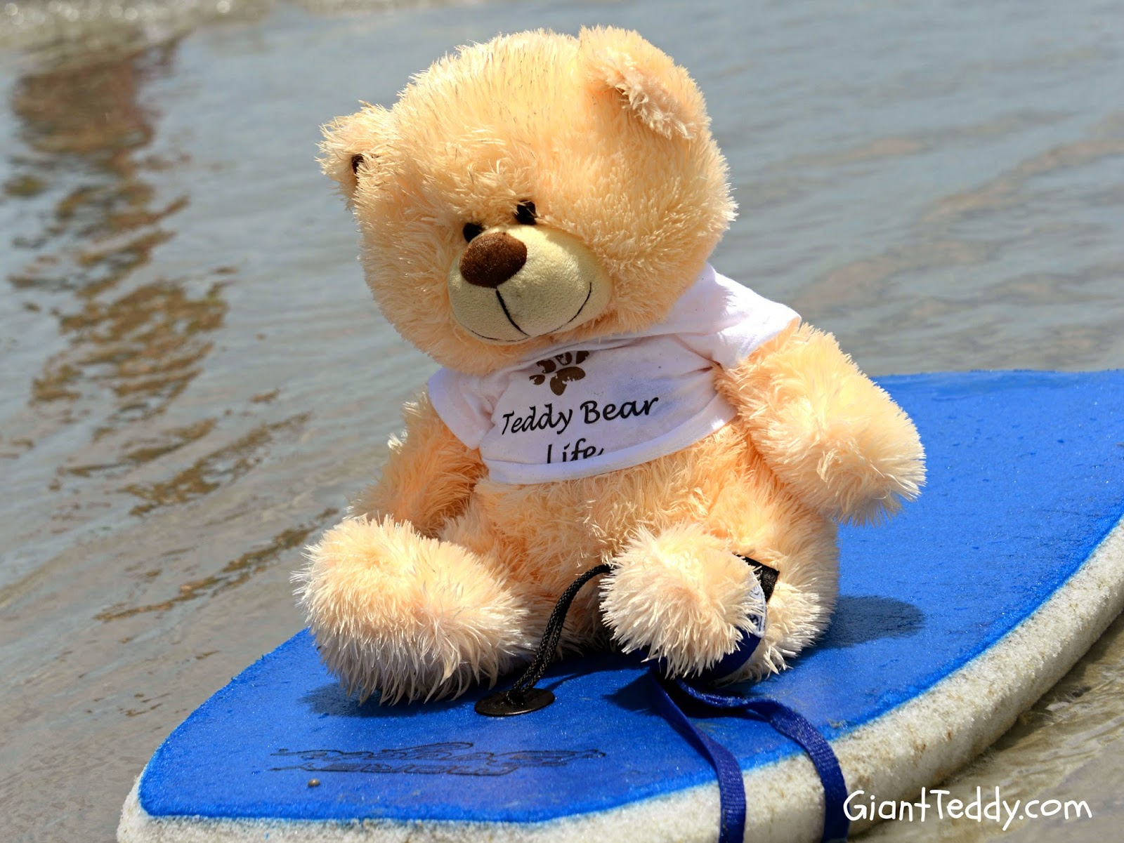 adorable teddy bears don't usually boogie board