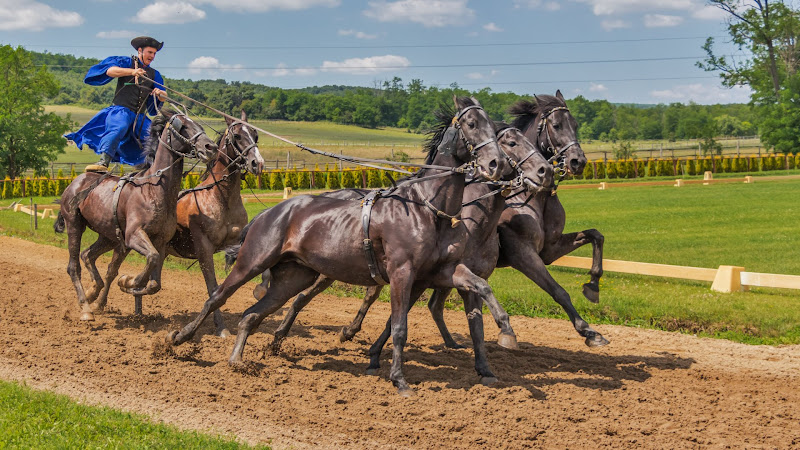 Riding on Five Horses HD