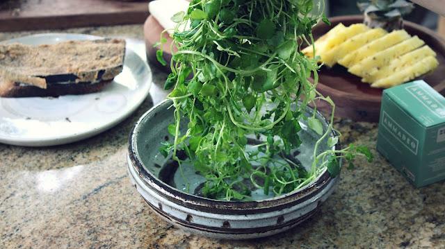 Lanche Vegetariano