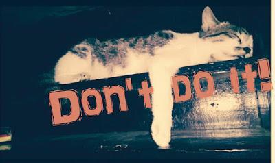 jangan-lakukan-pada-kucing