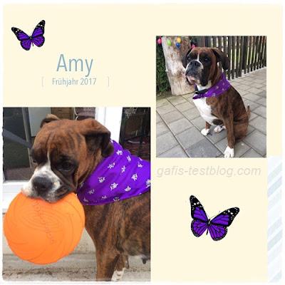 Amy unser kleiner Schmetterling