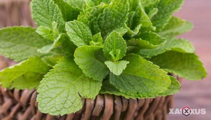 Cara memerahkan bibir dengan daun mint