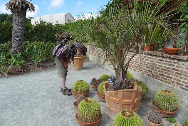 cactus terra botanica