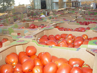 Image result for google image of 2000 lb  pallet of vegetables