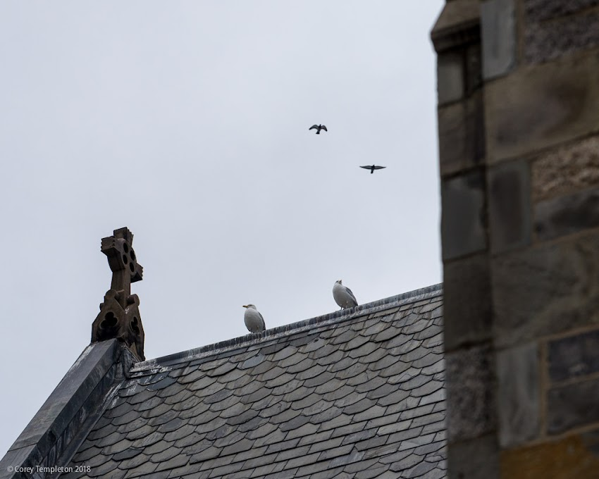 Portland, Maine USA February photo by Corey Templeton. Birds atop St. Luke's Cathedral on a grey afternoon.