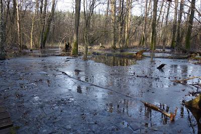 szlak czarny: roztopy na terenach podmokłych