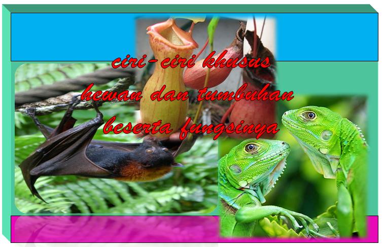 96 Gambar Hewan Dan Tumbuhan Yang Mempunyai Ciri Khusus Gratis Terbaik