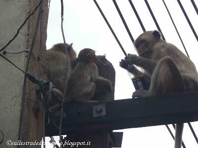 Scimmie Thailandia