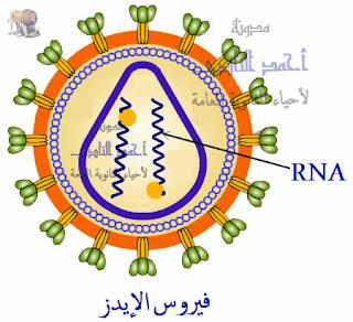 الفيروسات – المحتوى الجينى – المادة الوراثية -  RNA