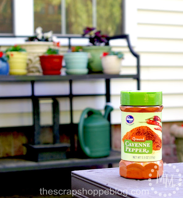 cayenne pepper to keep squirrels out of plants
