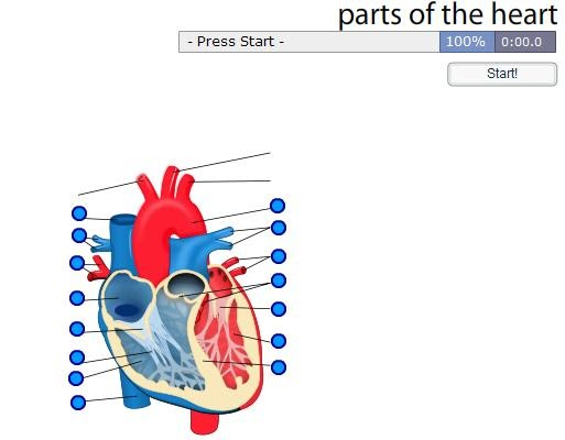 CLIL STARTERS: PARTS OF THE HEART GAME