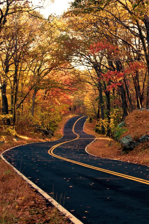 fall on road