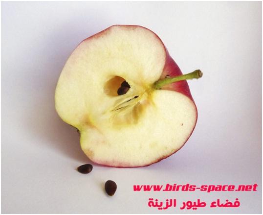 أغلبية طيور الزينة تحب أكل التفاح و هو ذو فوائد كثيرة للطيور لكن أخي المربي لا تقدم التفاح دون أن تنزع من البذور الموجودة به و طبعا بدون غسله جيدا بالماء .  ذلك لان بذور التفاح من المواد القاتلة لطيورنا ذلك لاحتوائها على مادة  (Amygdalin )التي تتحـــــلل في معدة الطائر و تطلق مادة  السيانيد(Cyanide) و لو بنسب قليلة  و هي مادة السيانيد السامة تسبب نوبات عصبية و ضيق في التنفس و يمكن أن تظهر أيضا اضطرابات هضمية مع الإسهال و القيئ و قد تؤدي لموت الطائر إذا تناول كمية كبيرة من بذور التفاح .  نفس الأمر ينطبق مع بذور الأجاص ، و الخوخ و المشمش .