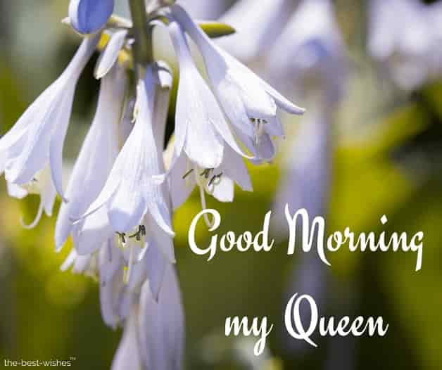 good morning my queen images