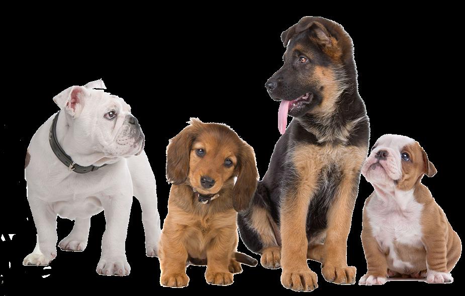 Canine Anti Cystinuria Centre