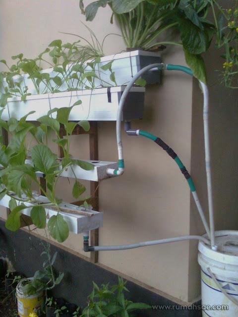 Menanam Sayuran secara Hidroponik Menggunakan Talang Air