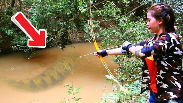6 animais mais perigosos do Brasil