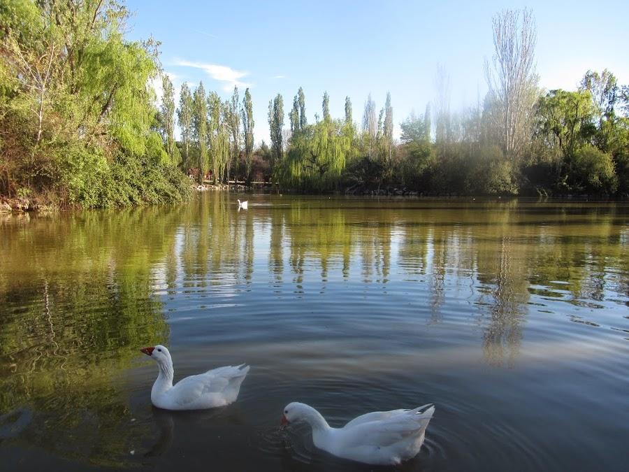 Parque Natural El Soto, situado en Móstoles y con numerosas especies vegetales y animales.