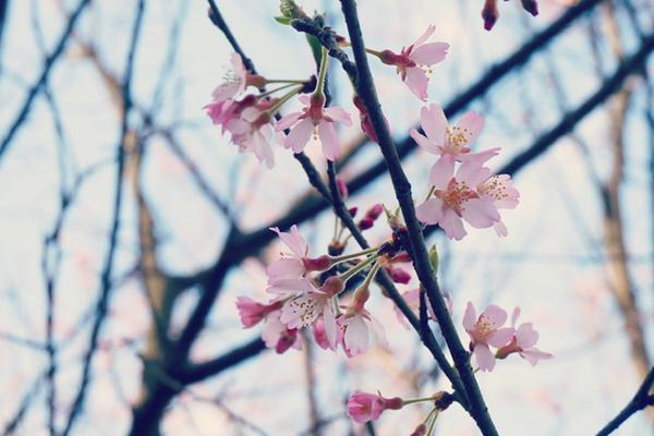 NONtic 2016年桜写真