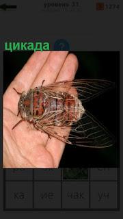 человек на своей ладони держит цикаду