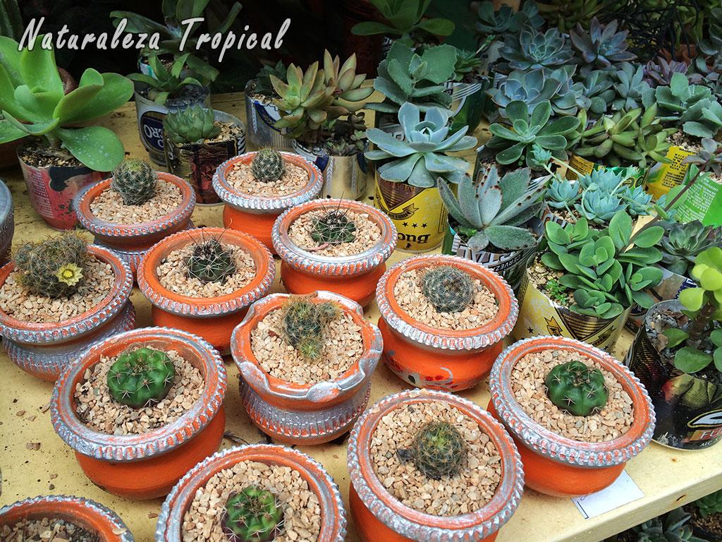 Naturaleza tropical precauciones a tener en cuenta antes for Donde venden plantas